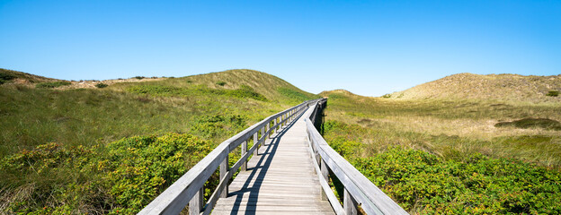 Wall Mural - Green dune landscape on the island of Sylt, Schleswig-Holstein, Germany