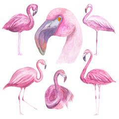 Canvas Prints Flamingo Watercolor illustration Composition of flamingos