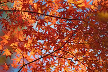 秋色の庭園
