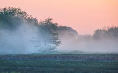 Wall Mural - tree in dense morning fog