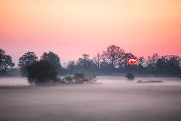 Wall Mural - misty sunrise on Dutch farmland