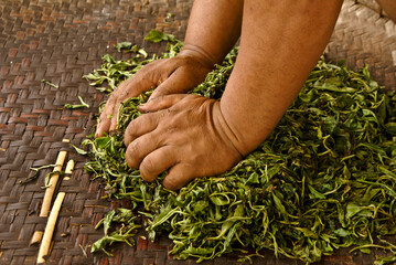 Fototapeta Hands pressing moisture from tea leaves on a woven mat, Xishuangbanna, Yunnan, China obraz