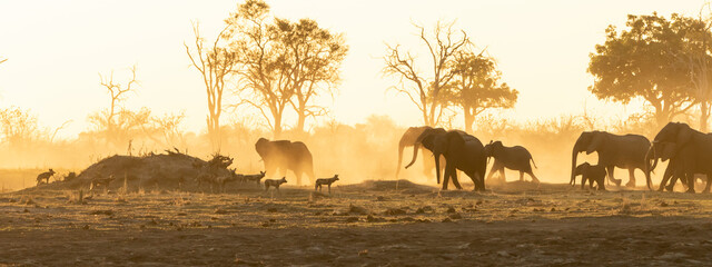 Elephant herd and wild dogs in the sunset and dust