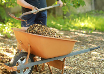 filling orange color wheelbarrow with wood chips at the community garden