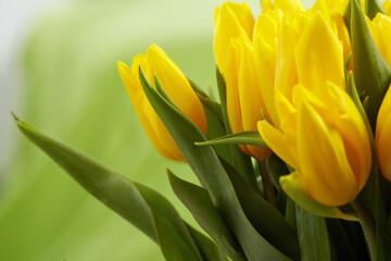 Photo Blinds Tulip Yellow tulips