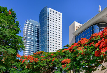 View of boulevard Rothschild with poinciana  trees  and new skyscrapers in Tel Aviv.