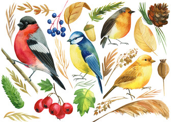set of colored birds, titmouse, bullfinch, canary, robin, and autumn plants, berries, branches, watercolor illustration