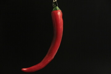 fresh organic peppers on a black background