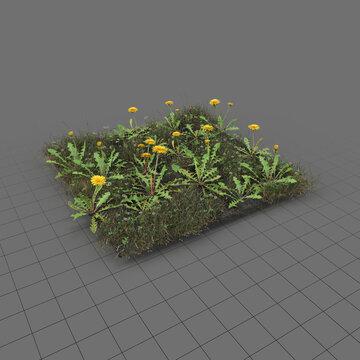 Dandelion meadow patch