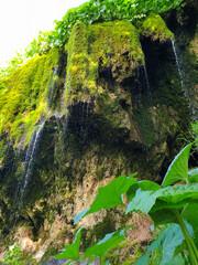 Lush green moss at Pietrele Vorbitoare waterfalls