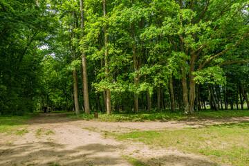 Białowieski Park Narodowy Białowieża Podlasie Ścieżka droga drzewa park