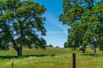 Foothills and Oak Trees-013