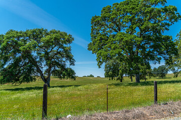 Foothills and Oak Trees-014