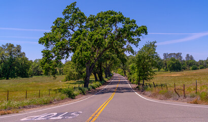 Foothills and Oak Trees-018