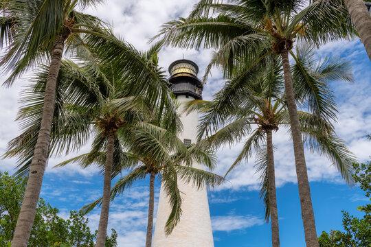 Palm trees around Cape Florida Lighthouse, Key Biscayne, Miami, Florida, USA