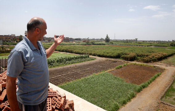 Abdlul Rahman Mostafa, the owner of papyrus farmlands and workshops looks at his agricultural land in al-Qaramous village