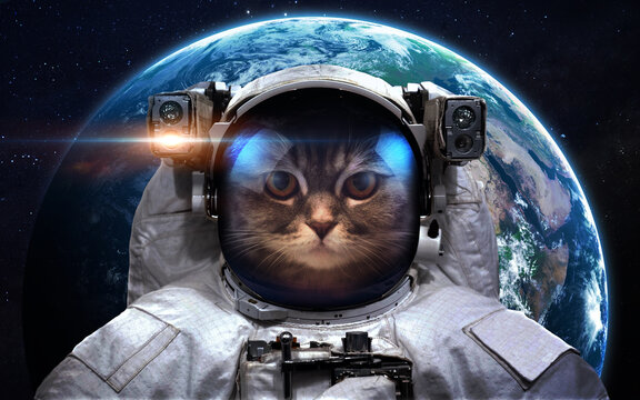 Cat astronaut and Earth