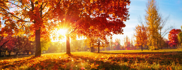 Fototapeten Honig Autumn Landscape. Fall Scene. Trees and Leaves in Sunlight Rays