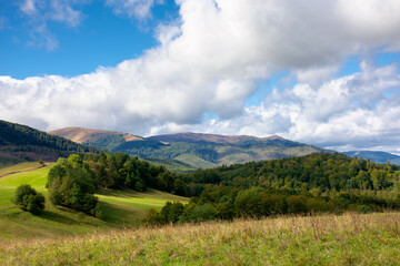 Wall Mural - grassy meadow on a sunny day in mountains. beautiful countryside landscape in dappled light. sky with clouds
