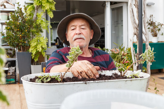 Senior male pensioner in casual clothes and hat planting seedlings in pot while sitting at table in garden near house