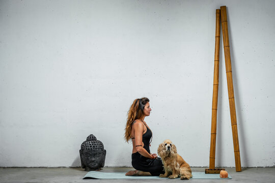 Side view of content female sitting on yoga mat with English Cocker Spaniel dog and meditating in Padmasana in room with Buddha head and bamboo sticks