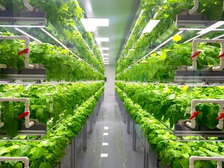 Fresh Vegetables are growing in indoor farm/vertical farm.