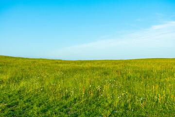 Pole łąka trawa niebo