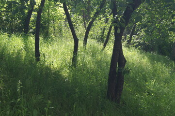 Drzewa w letni słoneczny dzień wśród zieleni.