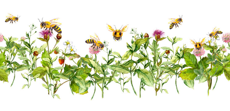 Honey bees in summer flowers, field grasses. Seamless floral border. Watercolor
