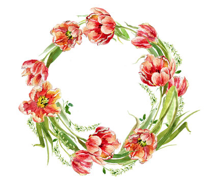 Romantic wreath of red tulips on a white background, watercolor drawing.