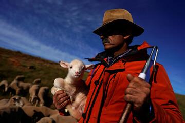 Shepherd Antonio Moran Diez holds a newborn lamb amid the coronavirus disease (COVID-19) outbreak in Villalobar