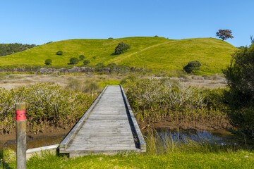 Wooden Bridge on the South Coast Trail by the Lagoon at Tawharanui Beach and Regional Park, Auckland New Zealand; Landscape Scenery