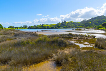 Panoramic View to the Lagoon at Tawharanui Beach and Regional Park, Auckland New Zealand; Landscape Scenery