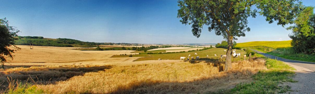 Felder im Sommer, Panorama