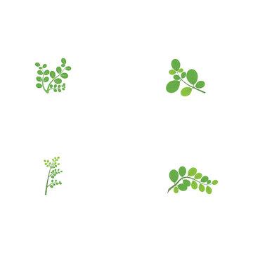 Set Moringa leaf Logo Template