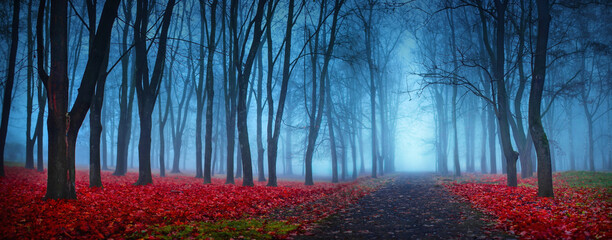 Beautiful Mystical Forest In Blue Fog In Autumn