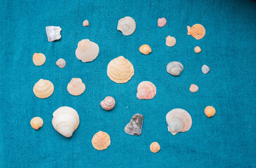 variety of seashells on a blue linen fabric