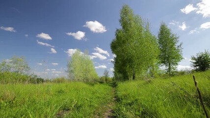 Fototapete - Rural summer landscape. Blue sky with clouds, forest, road through green meadow. Nature landscape wilderness. Countryside outdoors, relaxation weather, smooth movements, space scenic.