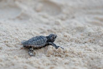Poster de jardin Tortue turtle