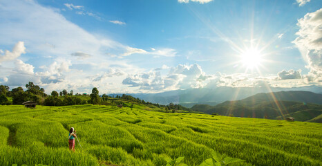 Fotobehang Rijstvelden Green rice field with mountain background at Pa Pong Piang Terraces Chiang Mai, Thailand