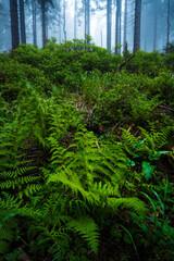 Mglisty poranek w lesie. Zielone rośliny