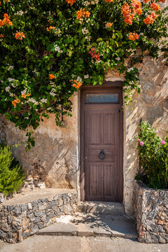Old door near a bush with flowers