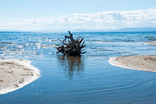 Driftwood on Lake Champlain