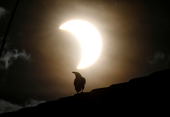 A crow stands on a roof as a partial solar eclipse is observed in Nairobi