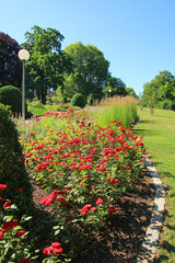 beautiful Rosenstein park with blooming roses, Stuttgart