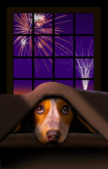 A cute little Beagle dog cowers under a blanket as fireworks explode outside the window behind him.