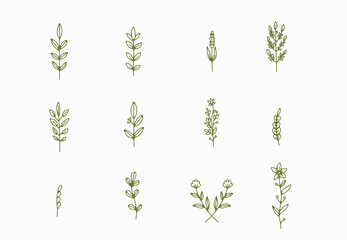 tiny simple botanical illustrations, line artwork, minimal design elements. elegant and delicate plant doodles for branding, wedding invitation, graphic design. spring floral clip art , feminine art