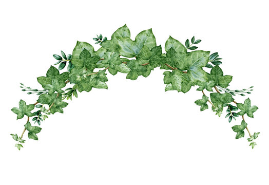 Green ivy arch bouquet watercolor illustration. Hand drawn decorative hedera border. Evergreen garden plant botanical ornament. Ivy lush arrangement isolated on white background