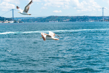 Photo sur Aluminium Dauphins seagull flying above the sea. seagull flying over the Bosphorus