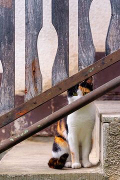 curious calico cat sitting outside. predator in the watching from behind the fence